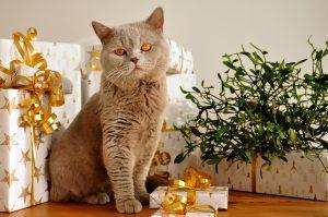 katze-geschenk